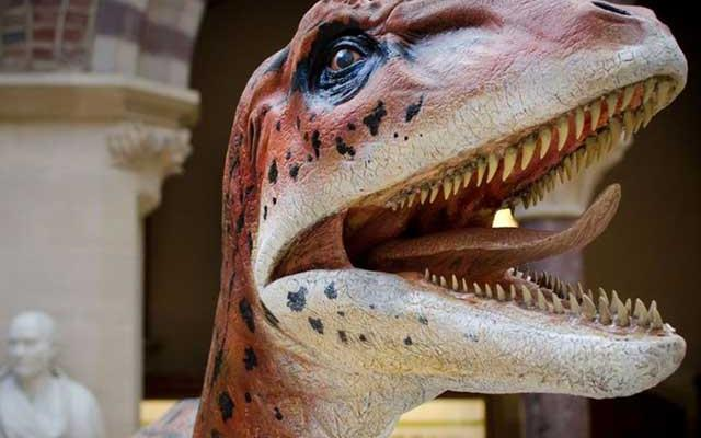 Model of Utahraptor for the Museum of Natural History