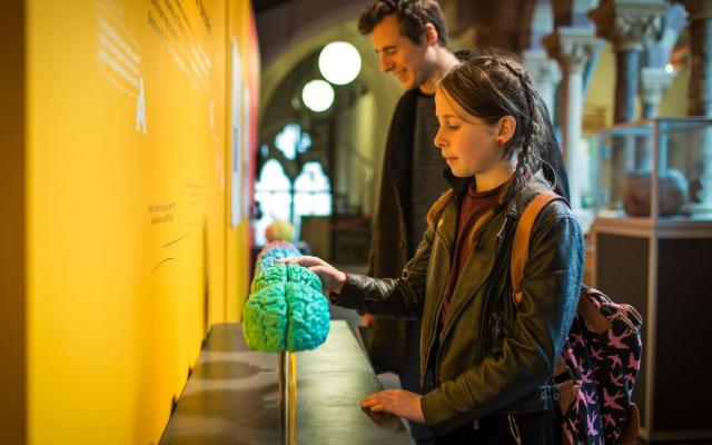 Visitors engaging with 3D printed brains in Brain Diaries exhibition at the Museum of Natural History