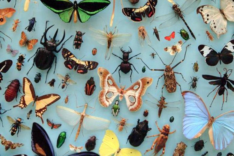 Varied insects on display