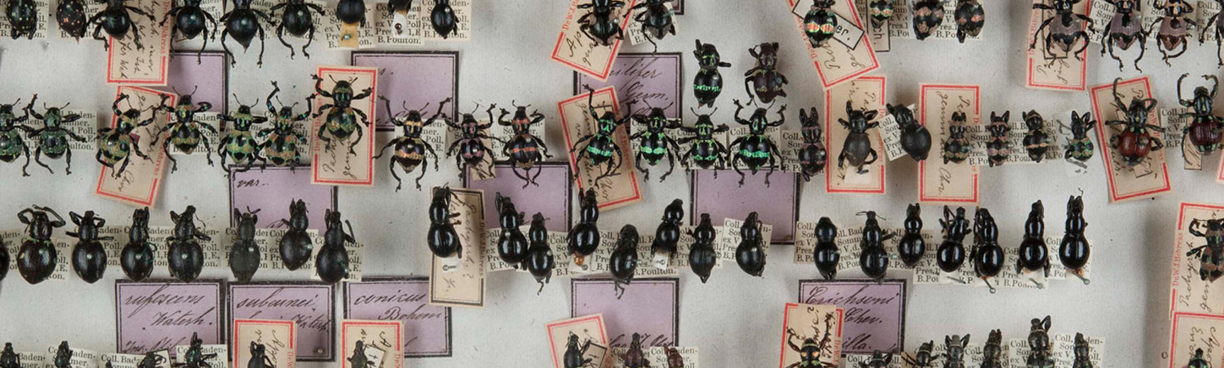 weevil collection colour spectrum 1