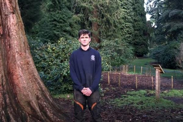 Young man stood surrounded by tall trees