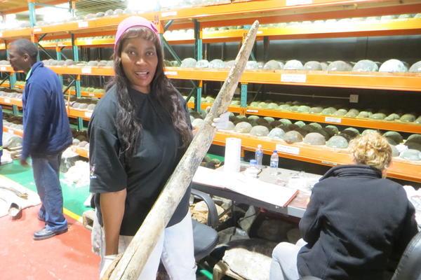 Woman holds up old elephant tusk