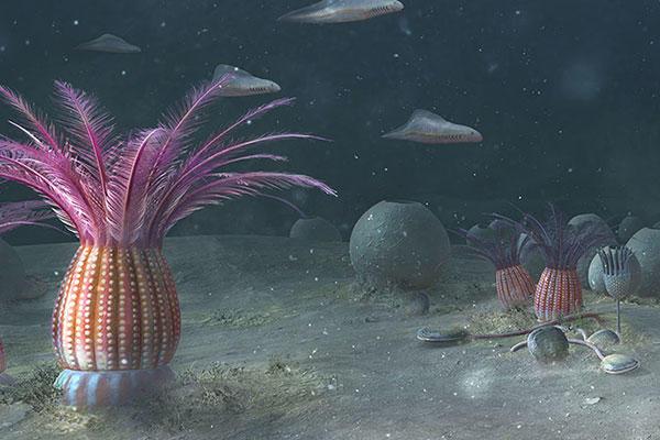 Colourful illustration of the Ediacaran sea floor
