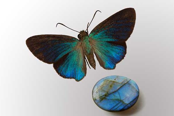 Blue butterfly and collections