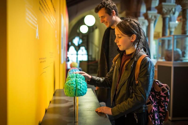 Visitors engaging with 3D printed brains