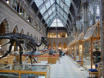 Interior view of Main Gallery, Museum of Natural History