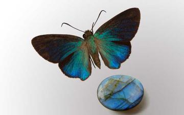 Gems of Earth and Air: Gem is Labradorite (cabochon) from Madagascar and Bitterfly is Coeliades chalybe immaculata Carpenter