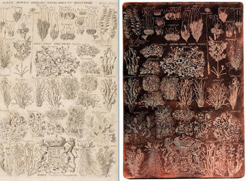 RTI capture, Morison Copper plates, Mosses, Section 15 Tab. 17. Image, Ashmolean Museum Conservation