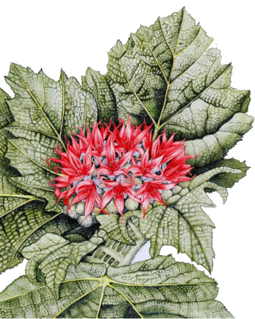 Drawing of a red flower surrounded by green leaves